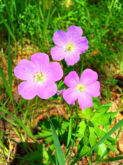 purple flowers nature walk